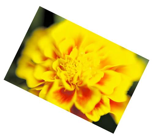 FlowerMacro04_20110713_TT